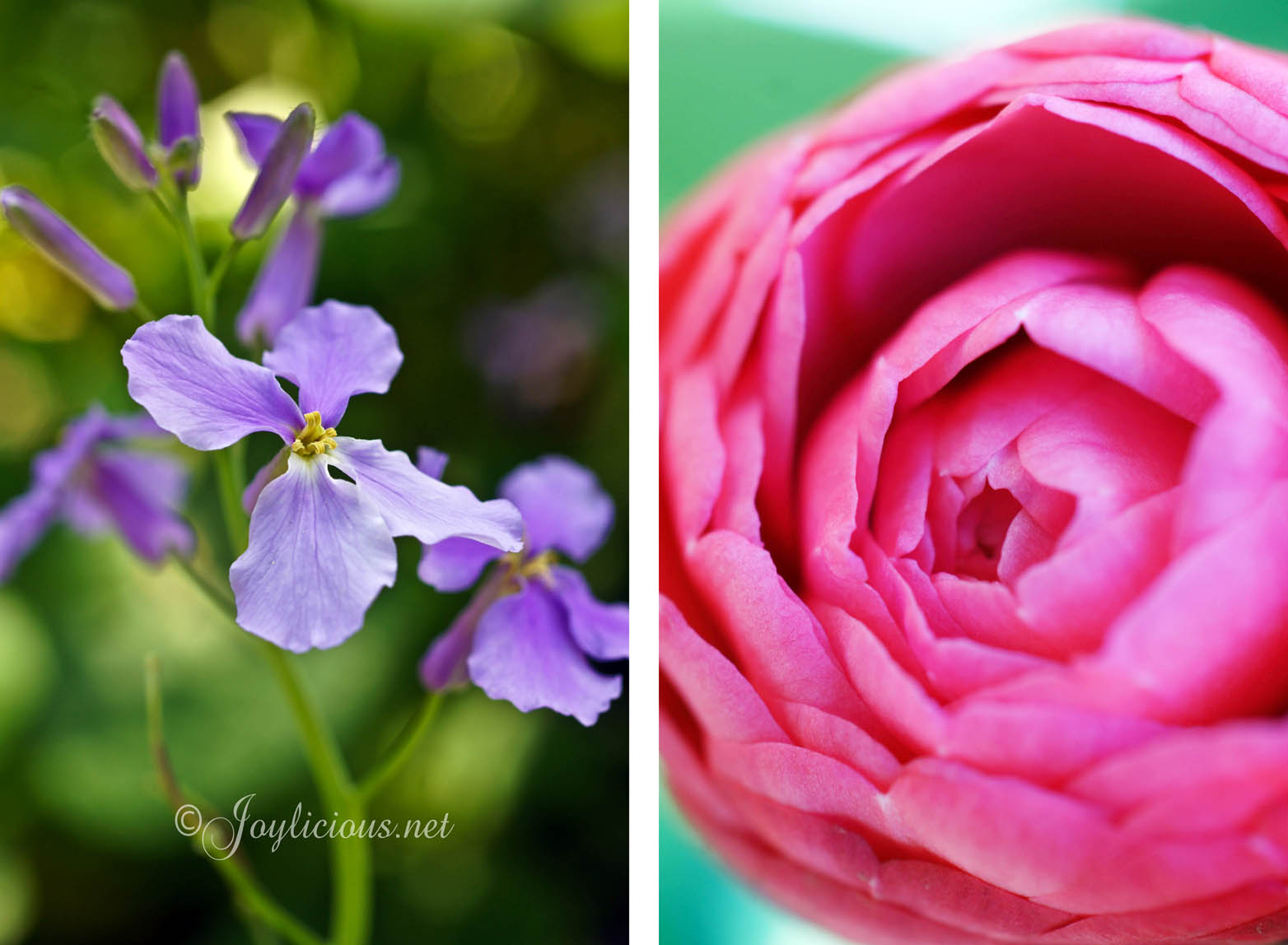 images of different types of flowers spacehero